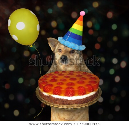 Birthday. Yellow dog holding cake Stock photo © orensila