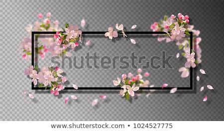 Сток-фото: границе · цветы · прозрачный · градиент · аннотация