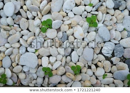 sóder · kő · textúra · minta · tengerpart · természet - stock fotó © tashatuvango