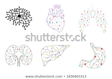 Kidneys 3d illustration abstract blue scientific background Stock photo © Tefi