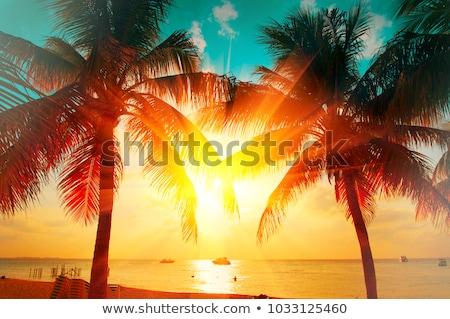 рай ладонями закат силуэта пальмами пляж Сток-фото © ssuaphoto