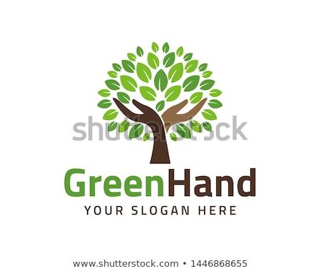 Stok fotoğraf: Eco · ağaç · yaprak · logo · şablon · yalıtılmış