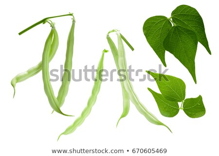 Haricot beans (Phaseolus vulgaris), pods, leaves, paths Stock photo © maxsol7