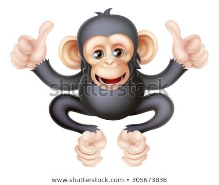 monkey cartoon animal giving double thumbs up stock photo © krisdog