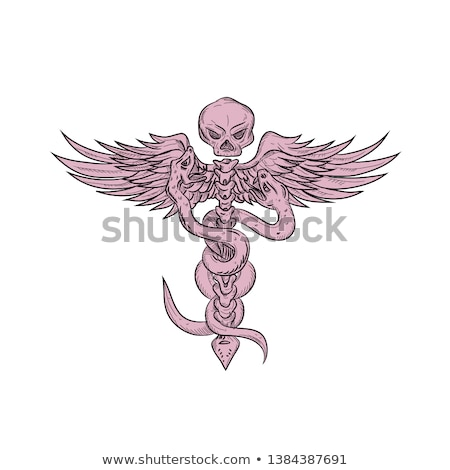 skull and spinal column with snakes drawing stock photo © patrimonio