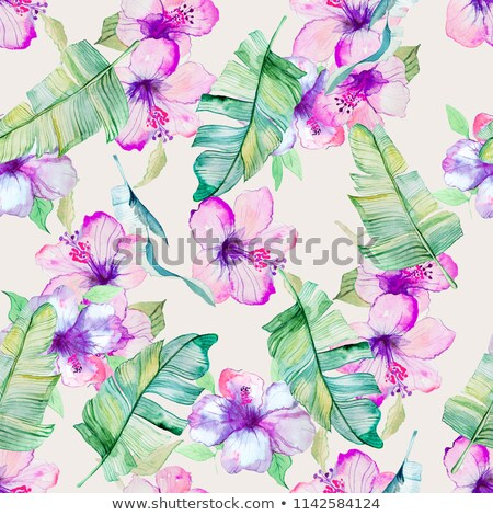 Violet and purple hibiscus flower Stock photo © tilo