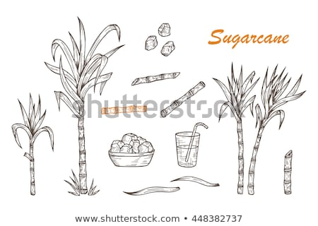 Stock fotó: Cukornád · szett · sétapálca · növény · aratás · levelek