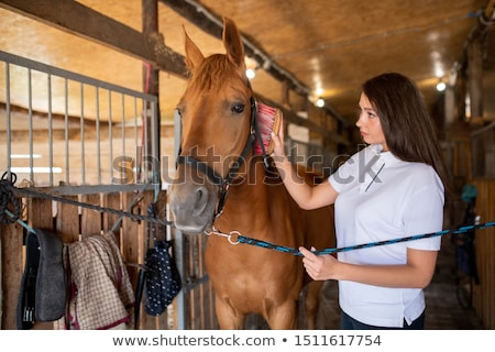 young woman brushing mane of brown purebred racehorse while standing by her stock photo © pressmaster