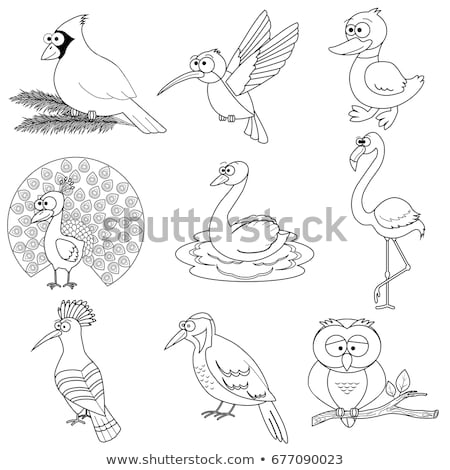 Stock photo: differences color book with safari animal characters