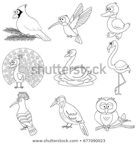 differences color book with safari animal characters stock photo © izakowski