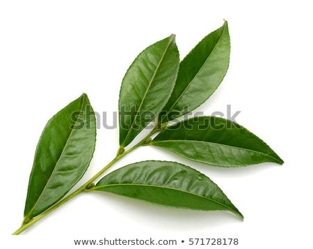 tea trees on hill stock photo © ansonstock