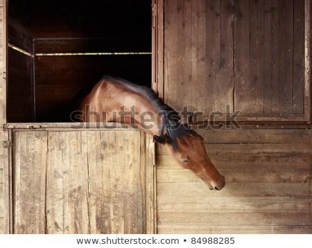 Horse peep Stock photo © RazvanPhotography