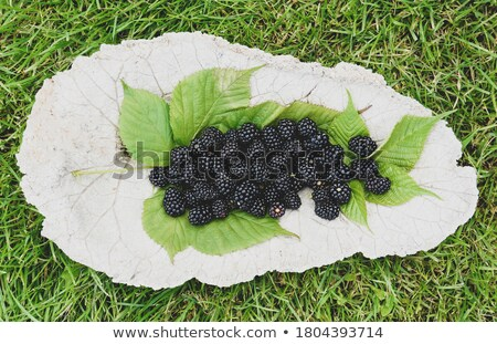 Foto stock: Ingredients Are Laid Out In A Beautiful Bowl