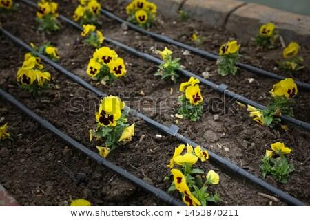 aerosol · riego · plantas · bosques · primavera · hierba - foto stock © stevemc