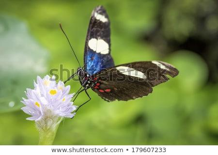 Pillangó makró lövés levél szoba copy space Stock fotó © macropixel