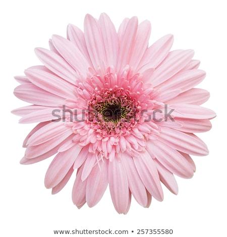 Stockfoto: Kleurrijk · bloemen · geïsoleerd · vaas · exemplaar · ruimte · natuur