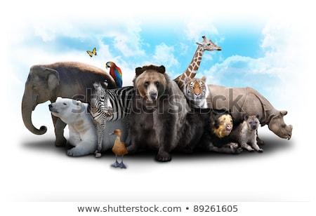 Hayvanlar kolaj yedi farklı doğa Afrika Stok fotoğraf © vlad_podkhlebnik
