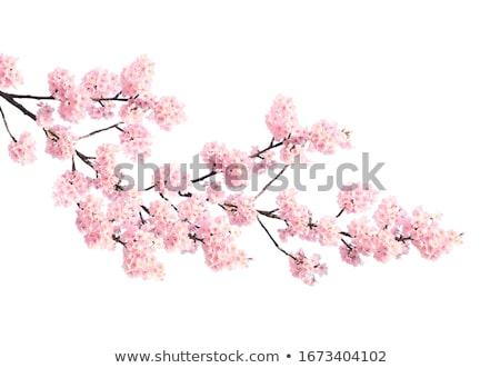 Bitki çiçek doğa kırmızı Stok fotoğraf © przemekklos