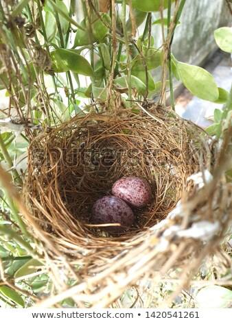 Baby easter egg vruchtbaarheid natuur voorjaar gelukkig Stockfoto © smocker03