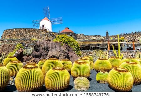 öreg · szélmalom · Kanári-szigetek · Spanyolország · fa · fém - stock fotó © meinzahn
