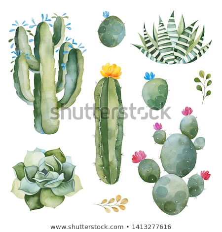 Bright Multicolored Cactus Flower on the White Background Stock photo © maxpro