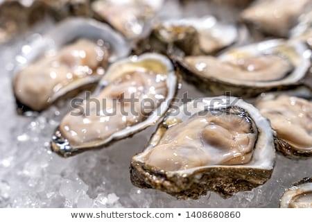 Oester vers zeevruchten witte achtergrond ruw Stockfoto © M-studio