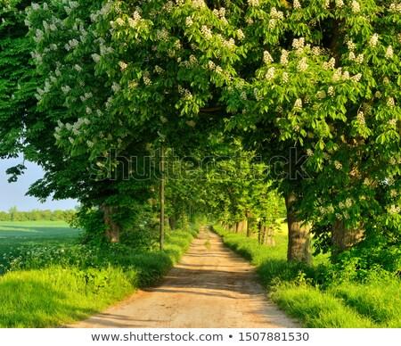Castanha árvore paisagem primavera Foto stock © ivonnewierink