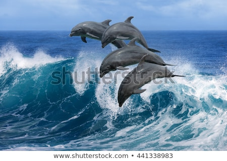 Four dolphins Stock photo © bluering