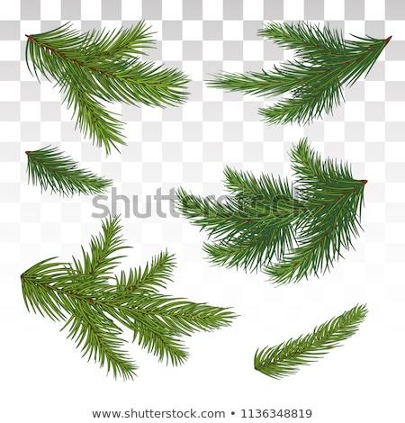 Verde soffice pino ramo simbolo capodanno Foto d'archivio © orensila