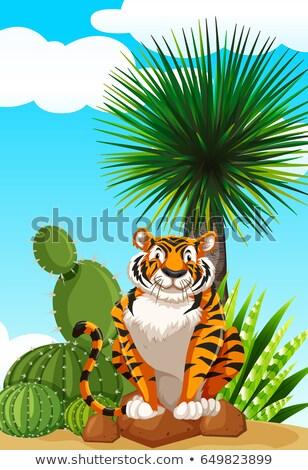 Tigre sesión cactus jardín ilustración cielo Foto stock © bluering