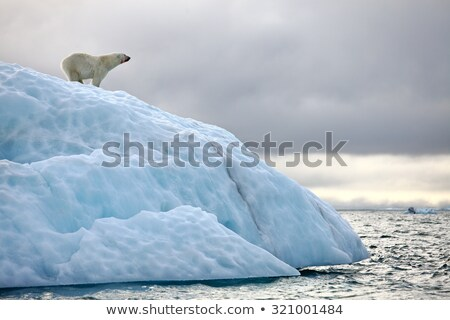 Wildlife in the arctic land Stock photo © bluering