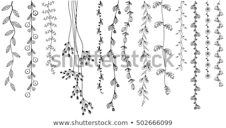 leaf flower vine set stock photo © cteconsulting