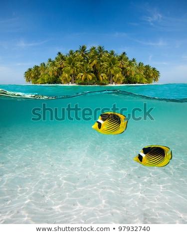 Sualtı atış doğa eğlence yüzme tropikal Stok fotoğraf © IS2