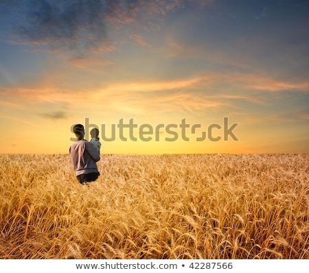 father and son in a wheat field stock photo © is2