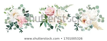 Vektor virág hátterek fehér virágok szett üdvözlet Stock fotó © odina222