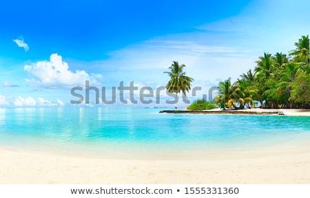 Landschaft Strand Landschaft Kokosnuss Bäume sunrise Stock foto © bbbar