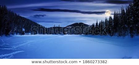 Floresta cena noturna ilustração grama madeira lua Foto stock © bluering