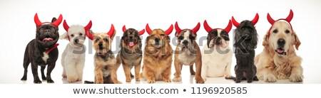 dokuz · köpekler · grup · yavru · tablo - stok fotoğraf © feedough