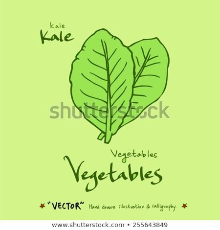 Cartoon Kale Leaf Idea Stock photo © cthoman