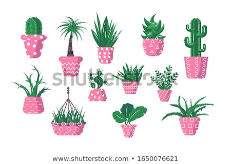 Different types of flowers in bush Stock photo © colematt