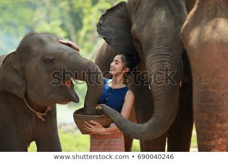 Ragazza elefante bella turistica donna Foto d'archivio © NeonShot