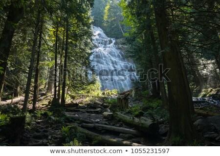 Menyasszonyi fátyol Kanada víz erdő tájkép Stock fotó © benkrut