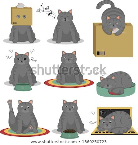 Grigio cat alimentare vassoio illustrazione sfondo Foto d'archivio © bluering