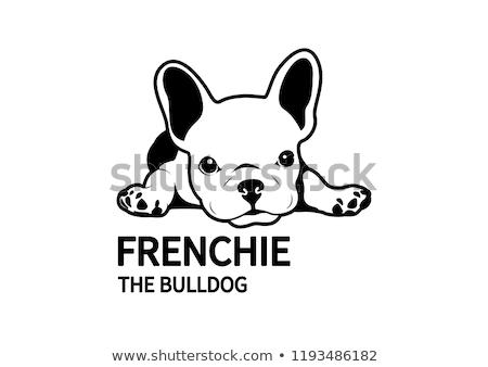 Frans bulldog ras hond ogen hoofd Stockfoto © OleksandrO