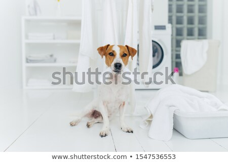 Photo of pedigree dog plays with white laundry, poses in washing room, basin with towels, washer in  Stock photo © vkstudio