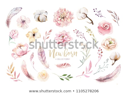 Roses and feathers stock photo © Clivia