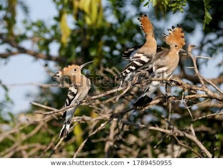 Geïsoleerd witte vogel veer vogels schilderij Stockfoto © shawlinmohd