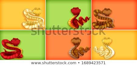 Modello design colore molti serpenti illustrazione Foto d'archivio © bluering