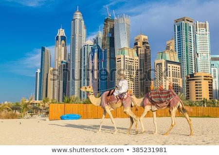 Camelo Dubai marina verão dia Emirados Árabes Unidos Foto stock © bloodua
