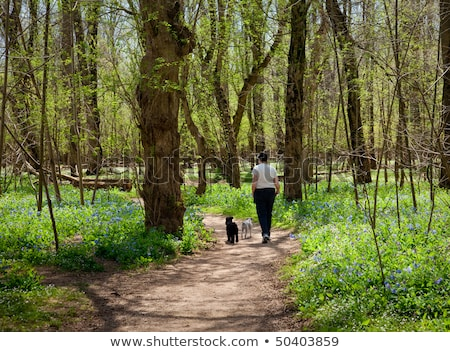 Lady with dogs on path in Bluebells Stock photo © backyardproductions